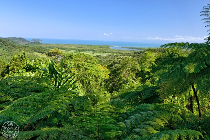 daintree_rainforest_07.jpg