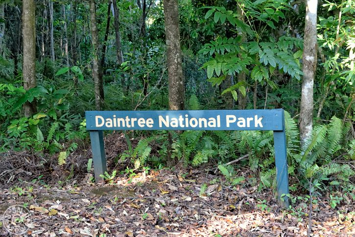daintree_rainforest_08.jpg