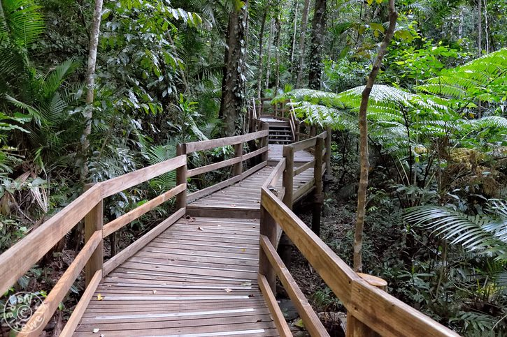 daintree_rainforest_09.jpg
