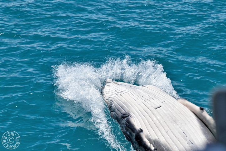 hervey_bay_whale_29.jpg