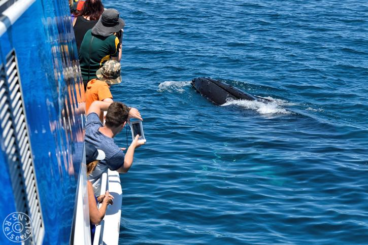 hervey_bay_whale_31.jpg