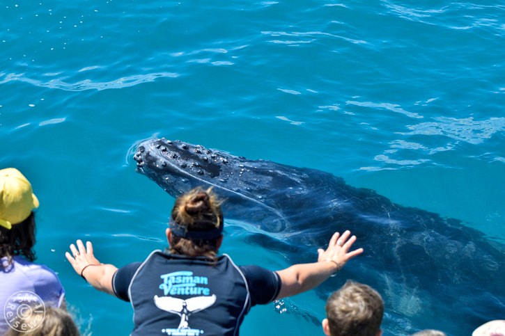 hervey_bay_whale_32.jpg