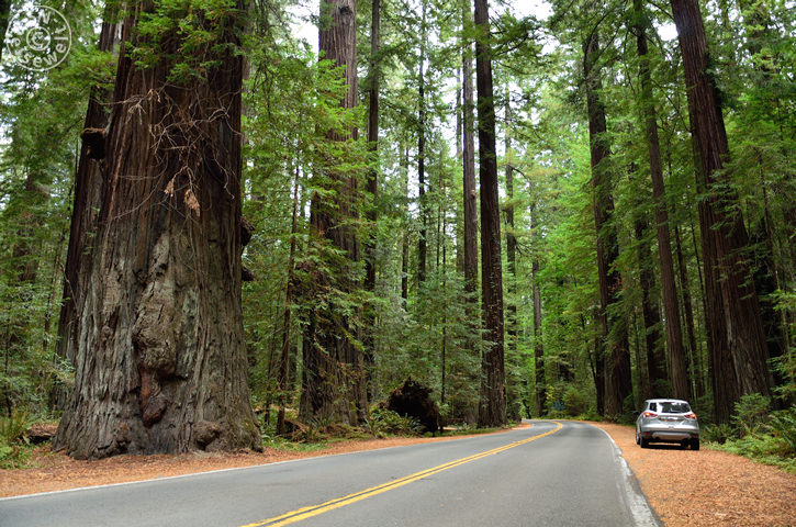 Redwood Highway 101