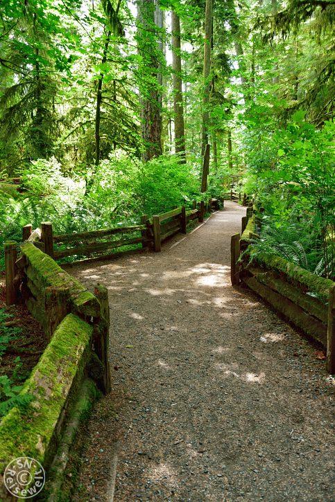 Rundweg, Cathedral Grove