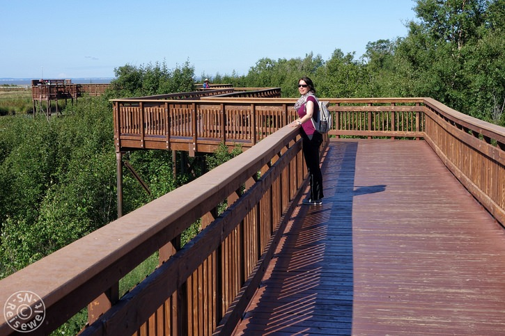 Potter Marsh Boardwalk